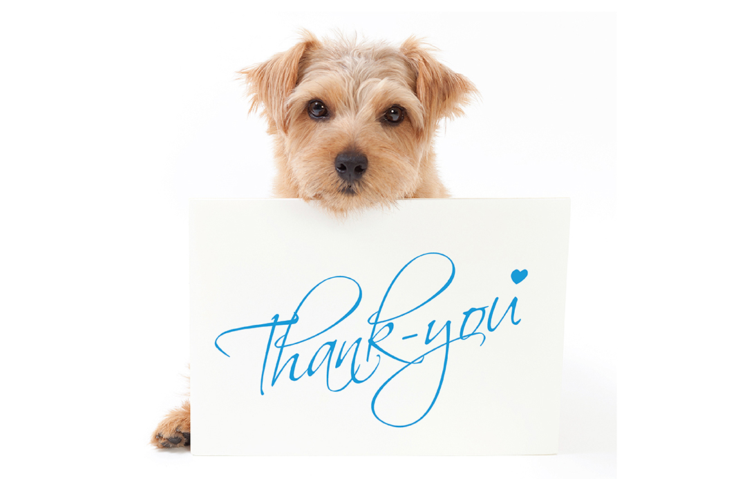 Thank you card design with dog on front